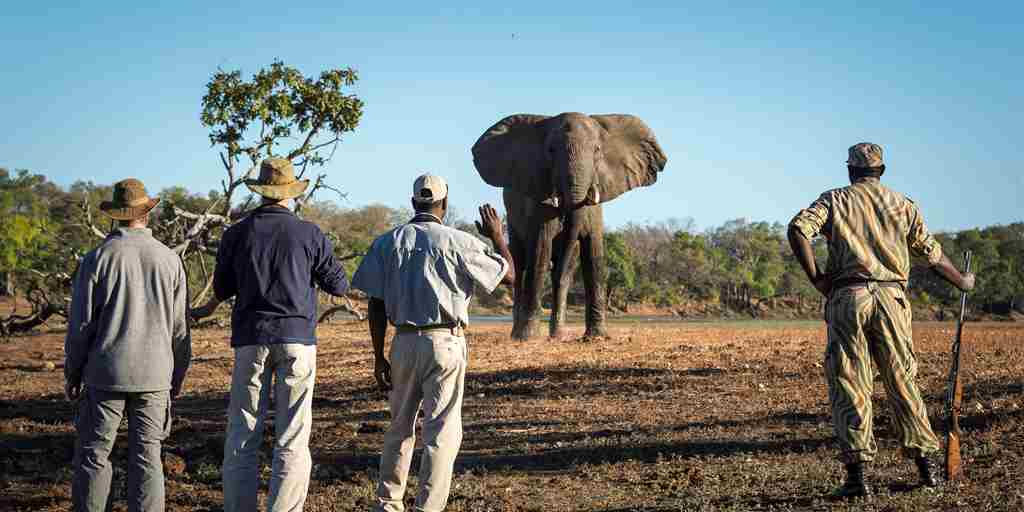 THE BUSHCAMP COMPANY - walking encounter with a bull.jpg