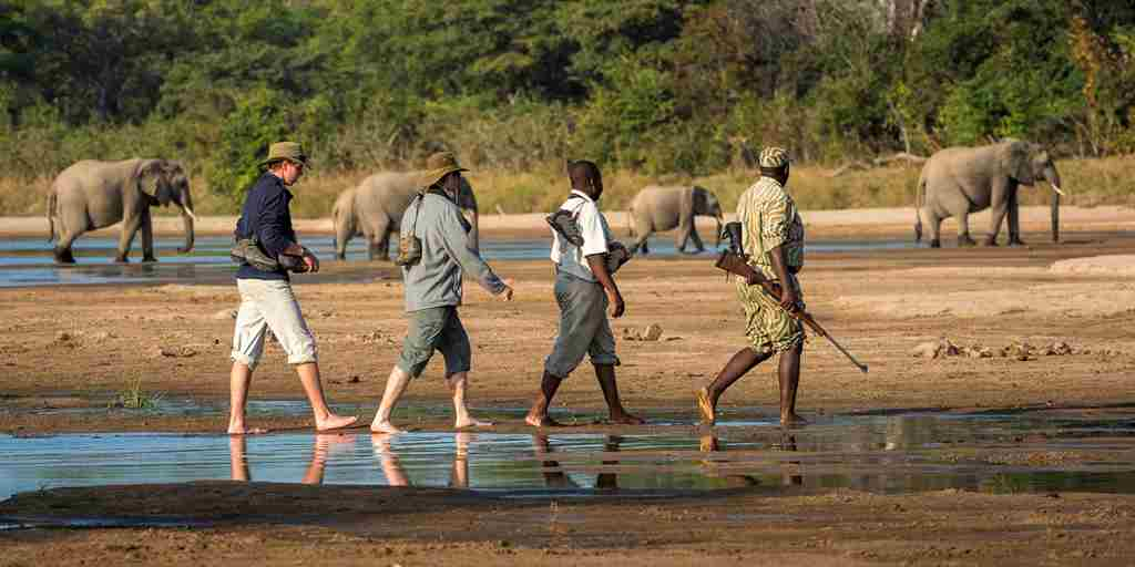 THE BUSHCAMP COMPANY - walking in tow.jpg