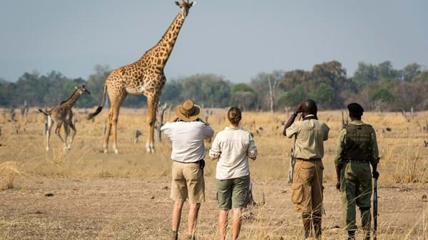Best Africa Safari Destinations to Visit | Yellow Zebra Safaris