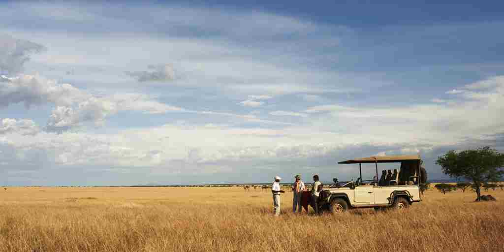 east africa tanzania game drive yellow zebra safaris