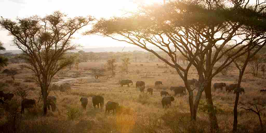 Little-Olivers-elephant-herd.jpg