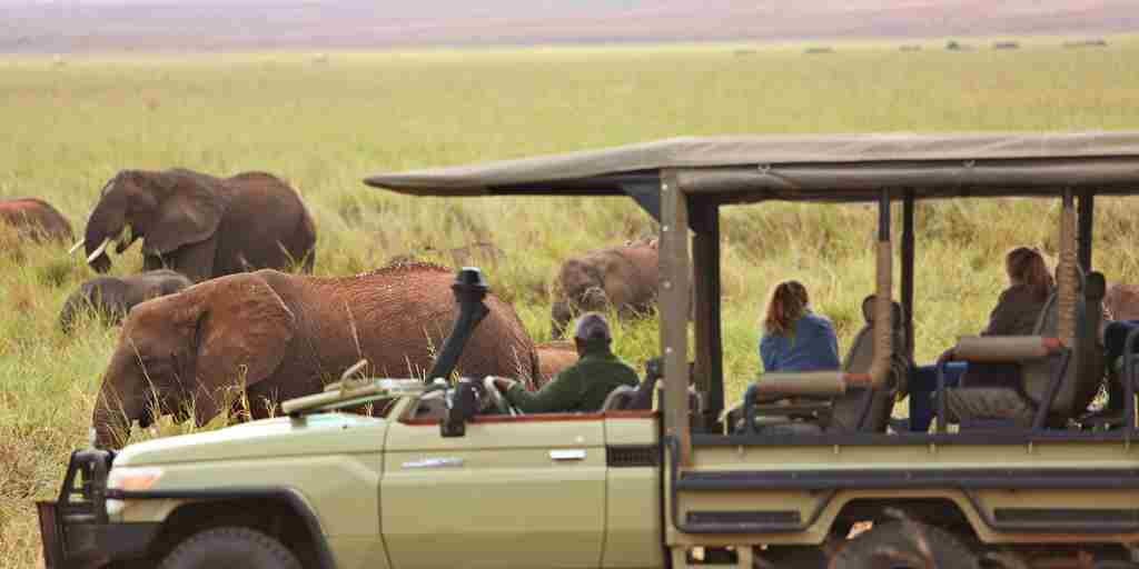 Olivers-camp-elephants-game-drive.jpg