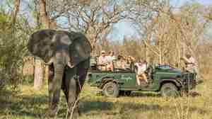 Singita-Castleton-Game-Drive5.jpg