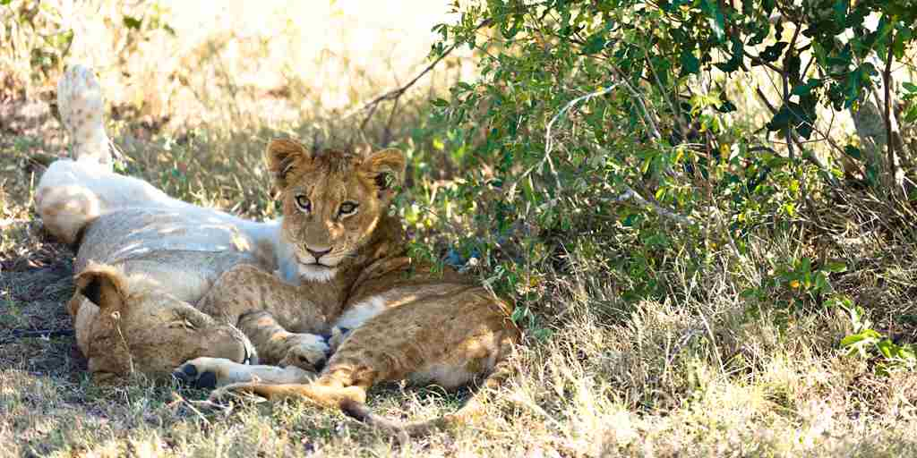 Singita-Ebony-Lodge-Wildlife.jpg