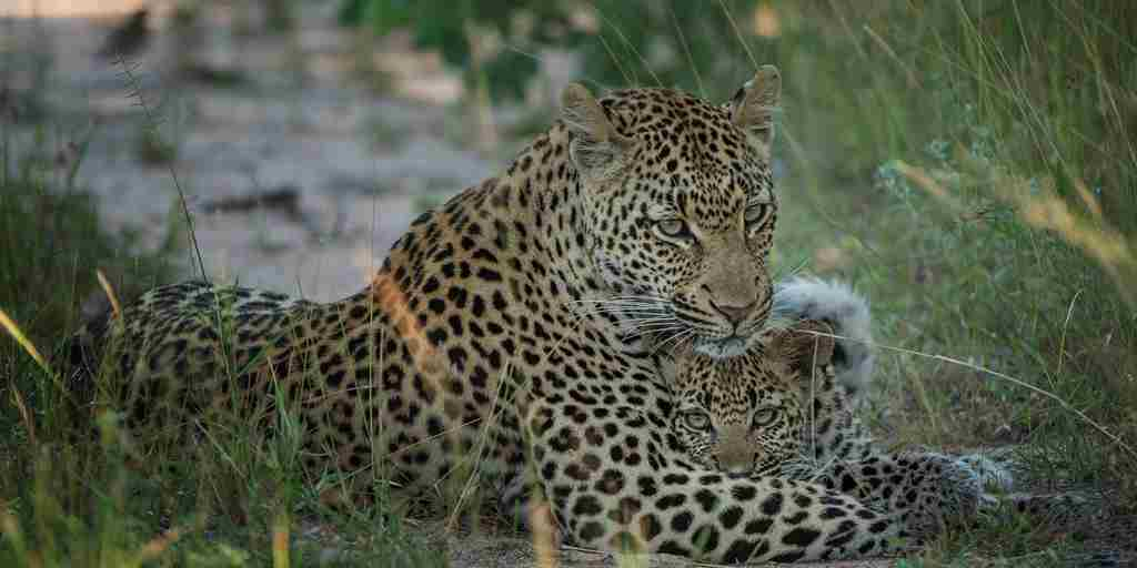 Singita-Ebony-Lodge-Wildlife7.jpg