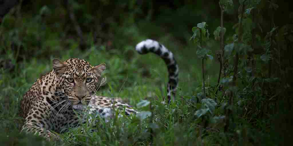 Singita-Serengeti-House-Wildlife6.jpg