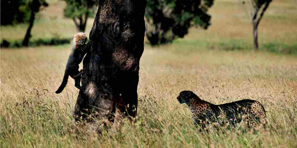 0219 Karen Blixen Camp_The Wildlife.JPG