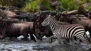 MaraExpeditionCamp-Wildlife-GreatPlainsConservation-15.jpg