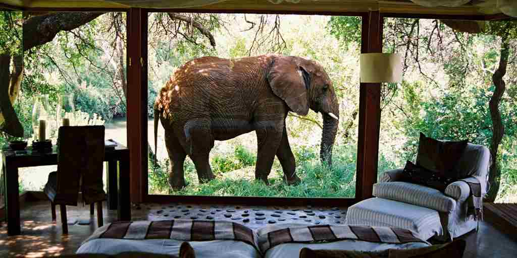 Elephant-outside-suite.jpg