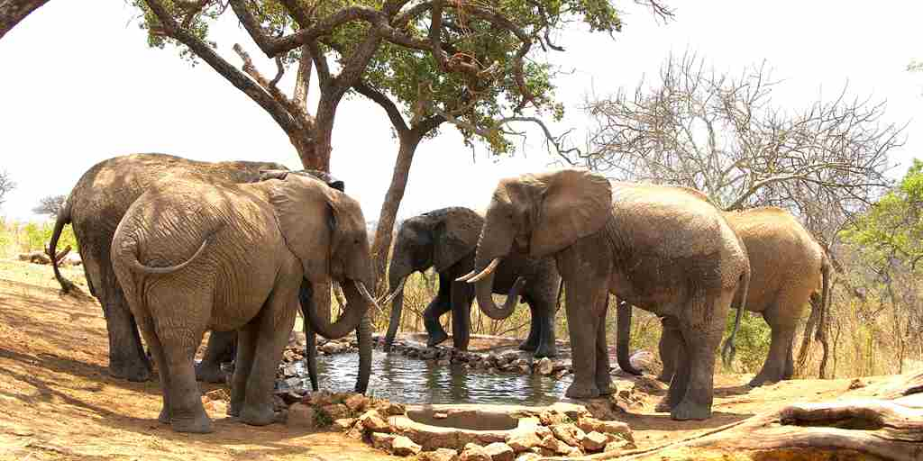 elephants drinking at water hole.jpg