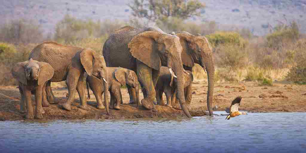 Tuningi-wildlife-elephant-waterhole.jpg