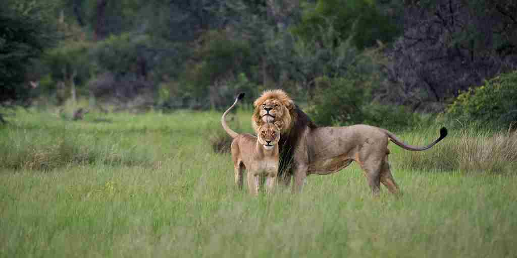 MM_Hwange_Feb2013_082.jpg
