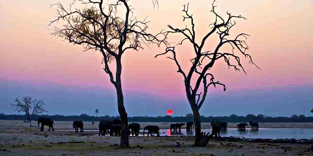 29. Imvelo Safari Lodges - Camelthorn Lodge - Elephants at sunset.jpg