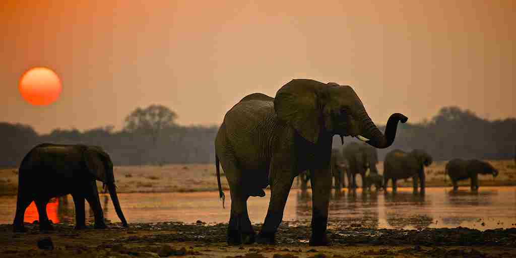 30. Imvelo Safari Lodges - Camelthorn Lodge - Elephants at the waterhole.jpg