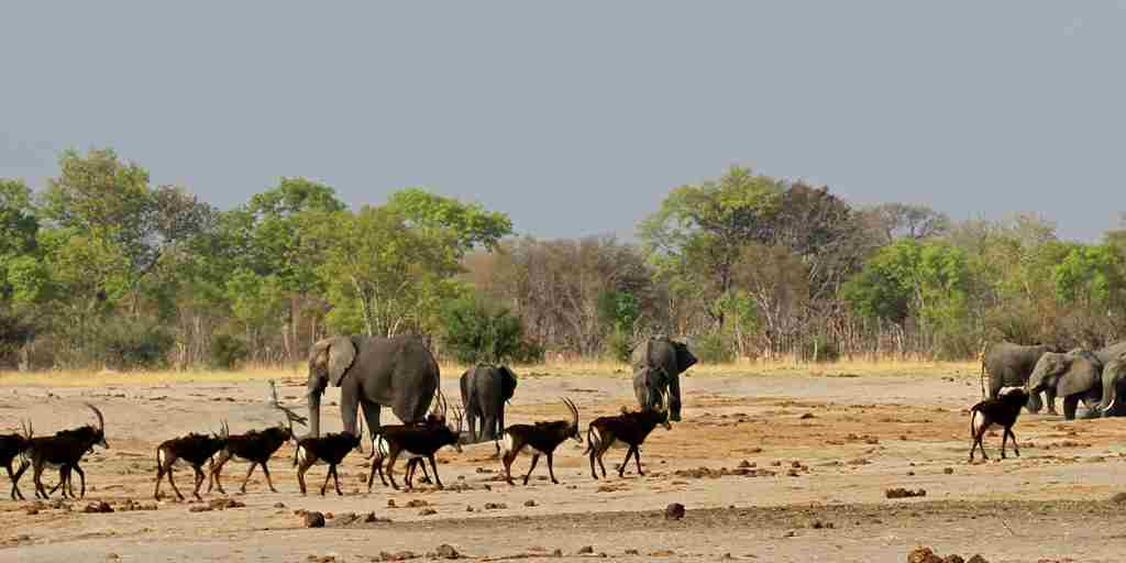 40. Imvelo Safari Lodges - Bomani Tented Lodge - Sable herd at Wexcau.jpg
