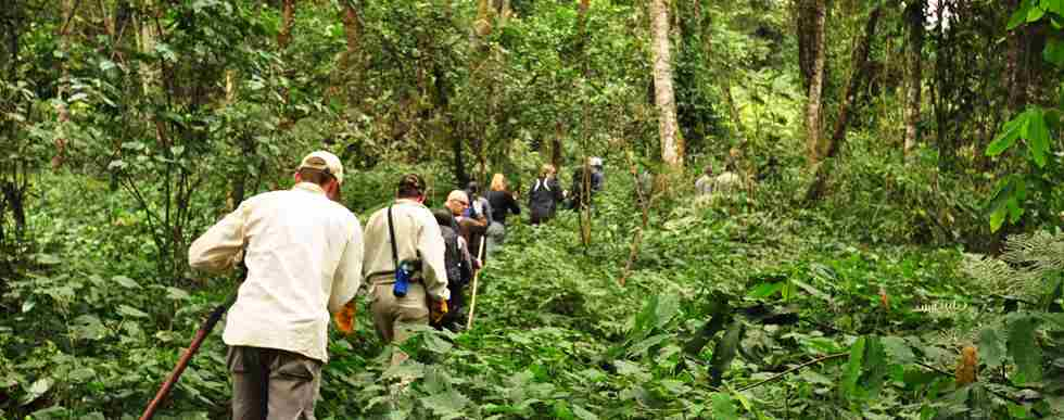 Sanctuary-Gorilla-Forest-Camp-trekking.JPG