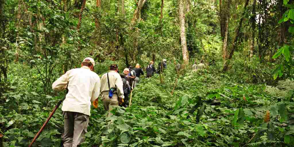 Sanctuary Gorilla Forest Camp trekking