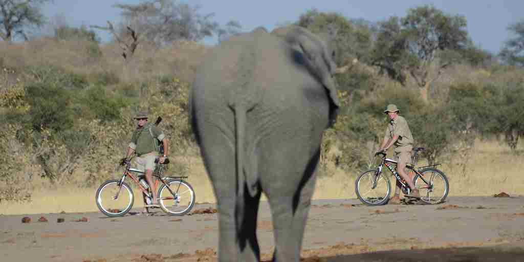 mountain-biking-along-the-elephant-paths.jpg