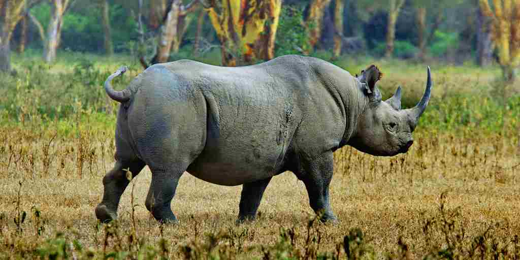 Highlands-Ngorongoro-rhino-sighting.jpg