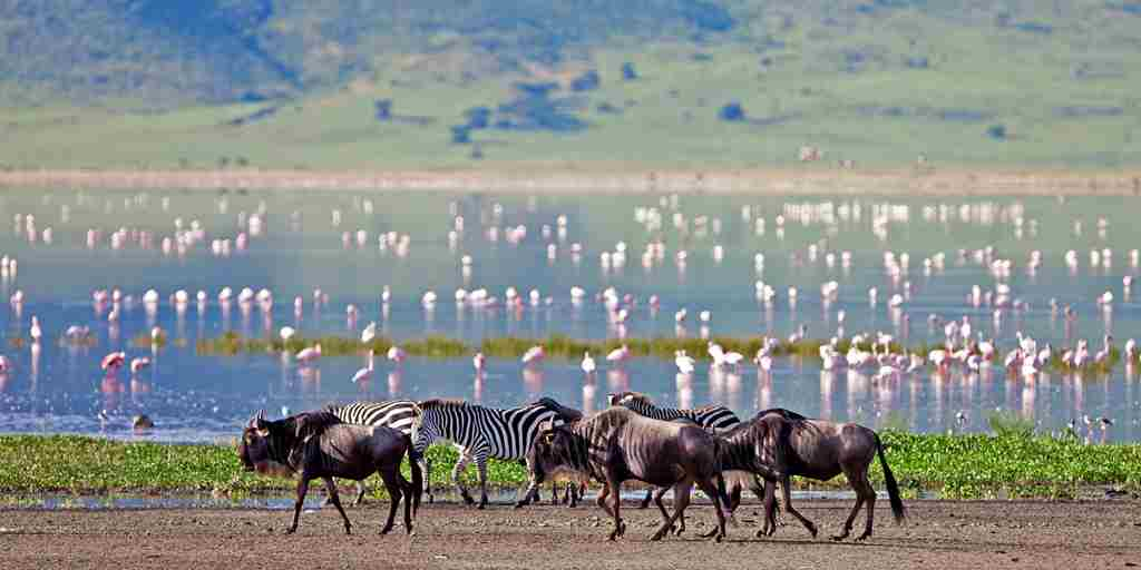 Highlands-Ngorongoro-wildebeest-and-flamingos-HR.jpg