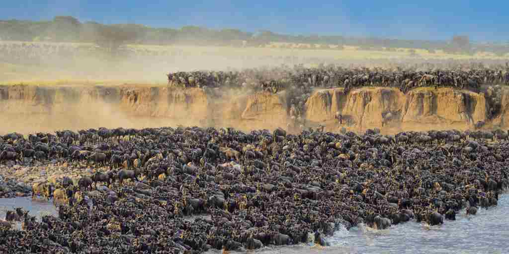 GreatMigration
