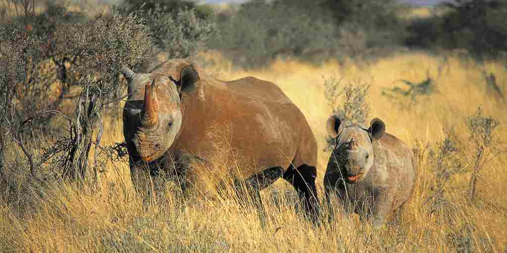 Black Rhino mom and baby.jpg