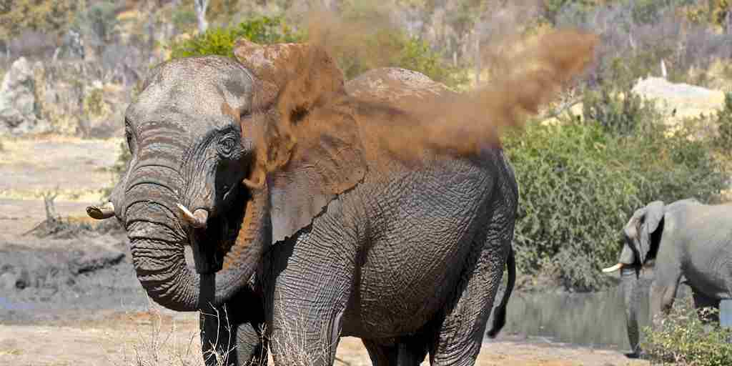 29 imvelo safari lodges bomani tented lodge elephant dust bathing at mpisini pan