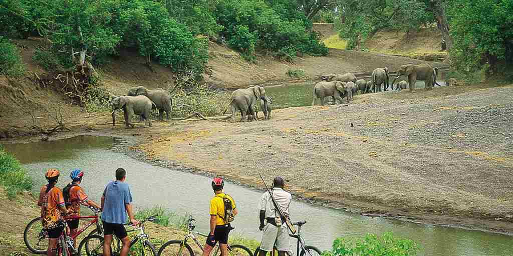 Mashatu-Cycling-Safaris1.jpg