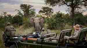 rm-experience-game-drive-elephant.jpg
