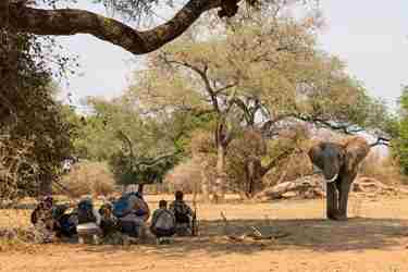 walking-safaris-zimbabwe.jpg