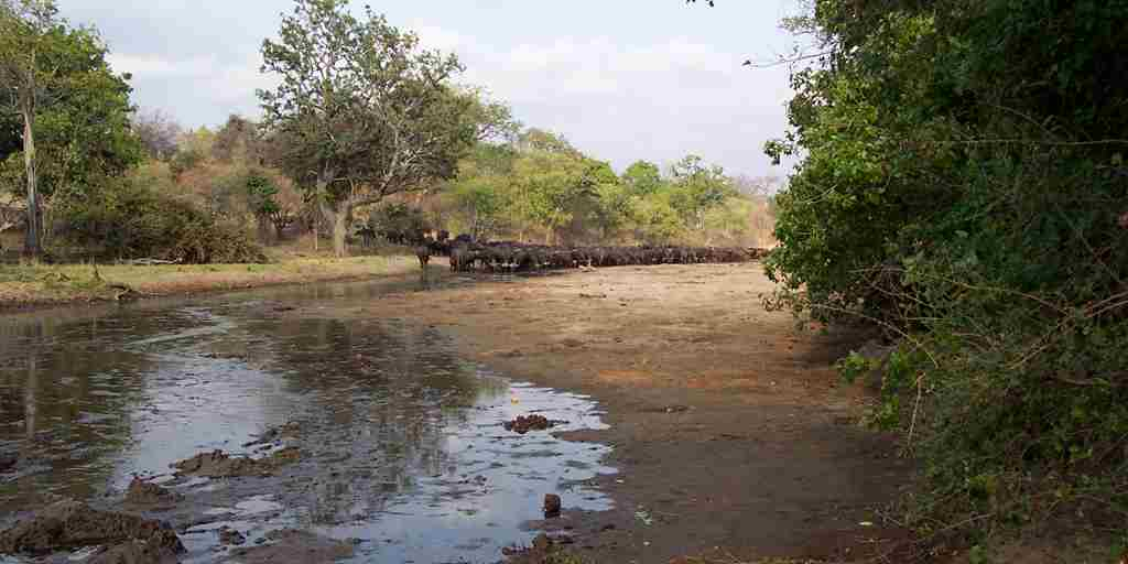 Buffalo Chitake River