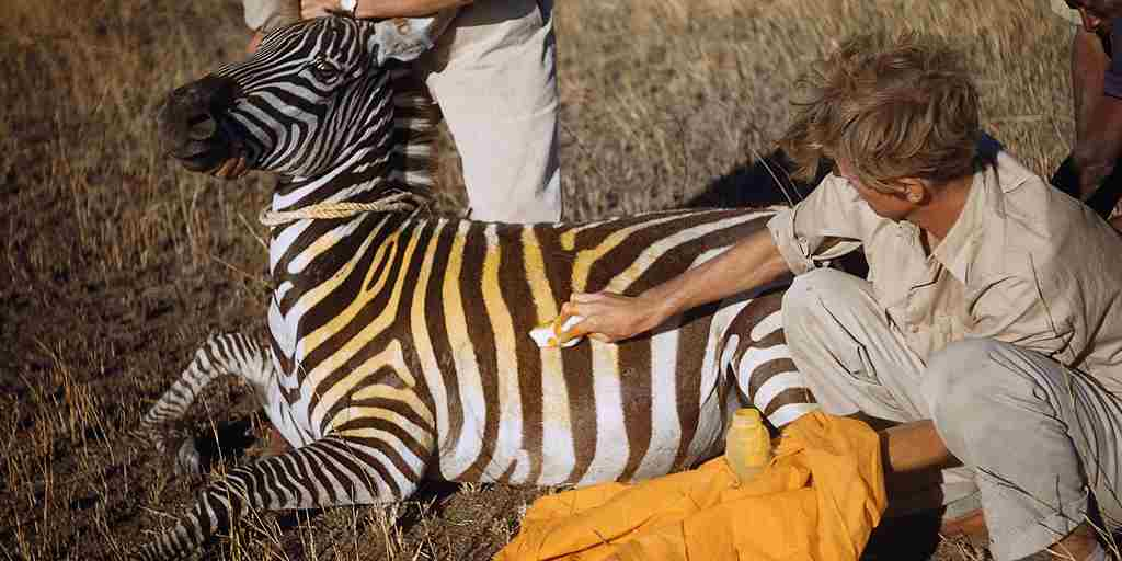Earth Day - Yellow Zebra Safaris.jpg