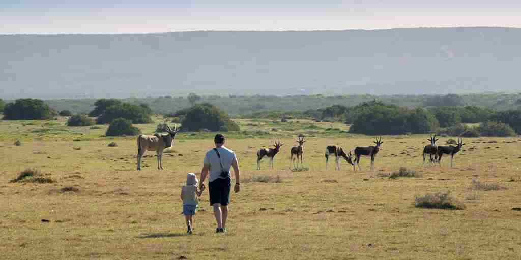 Morukuru walking with Eland and Bontebok south africa
