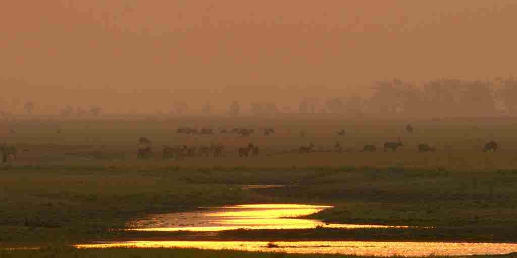 Explore Gorongosa - Floodplains (Credit - Neil Dampier).JPG