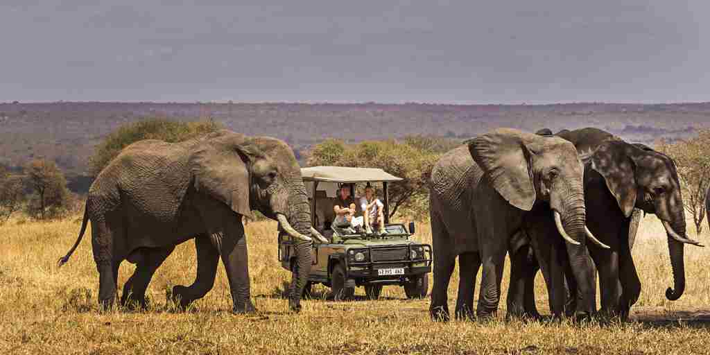 Elephants-tanzania-game-drive.jpg