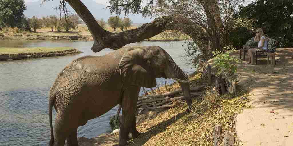 Elephant-encounter-Goliath-Safaris-Mana-Pools-Zimbabwe.jpg