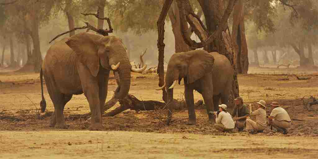 Elephants-Goliath-Safaris-Mana-Pools-Zimbabwe.jpg