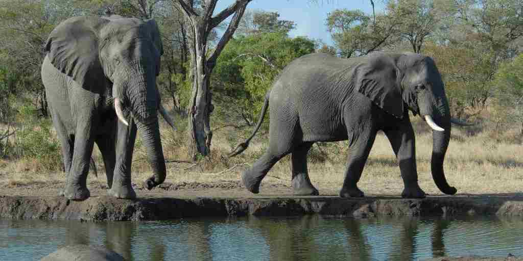 Elephants-at-watering-hole.jpg