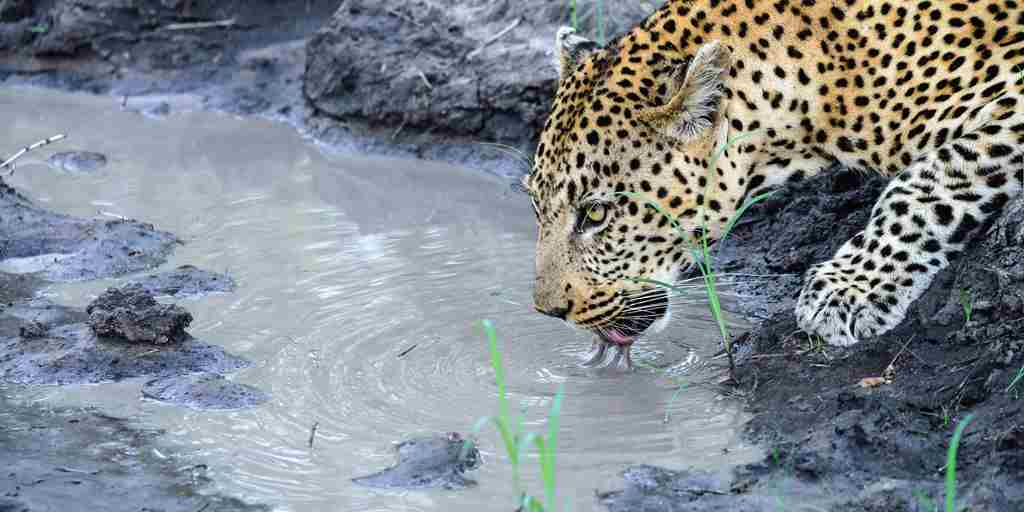 Leopard-sighting.jpg