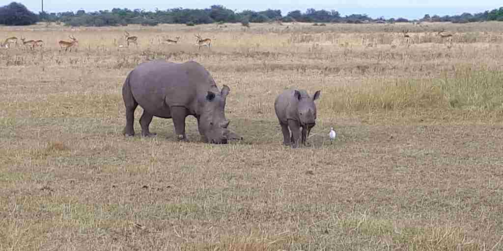 Rhino Conservation Botswana Yellow Zebra Safaris Kelly 3