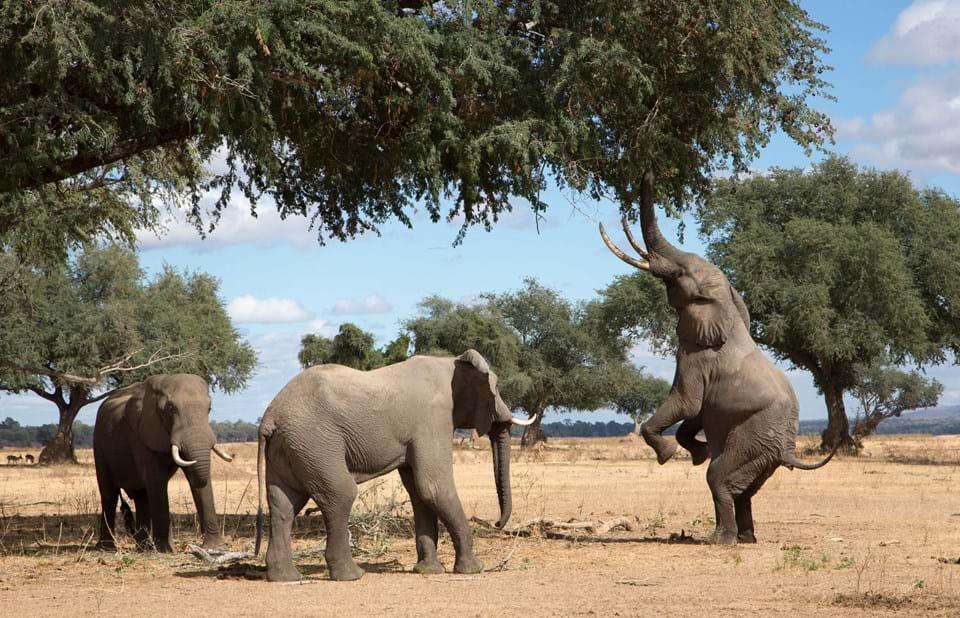 afrikanza-mama-pools-elephants-zimbabwe