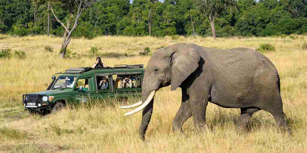 elephant-safari-govenors-private-camp-kenya.jpg