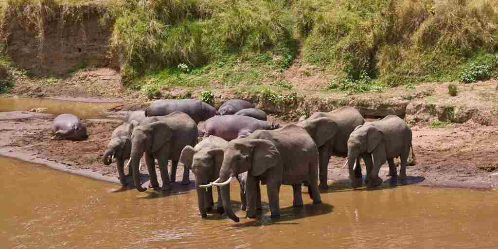 elephants-govenors-private-camp-kenya.jpg