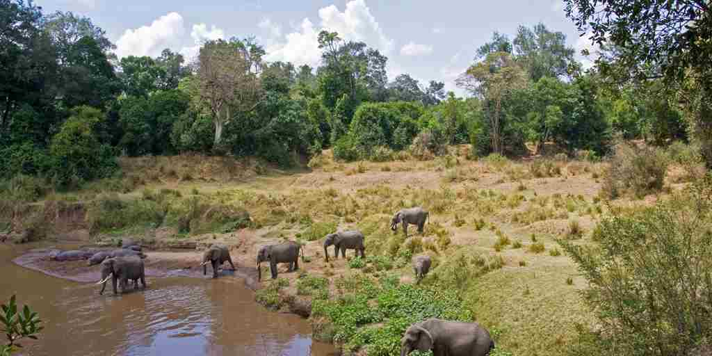 elephants-hippos-govenors-private-camp-kenya.jpg