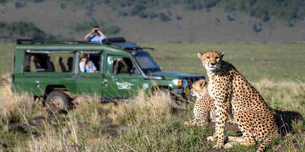 cheetahs-safari-governors-camp-kenya.jpg