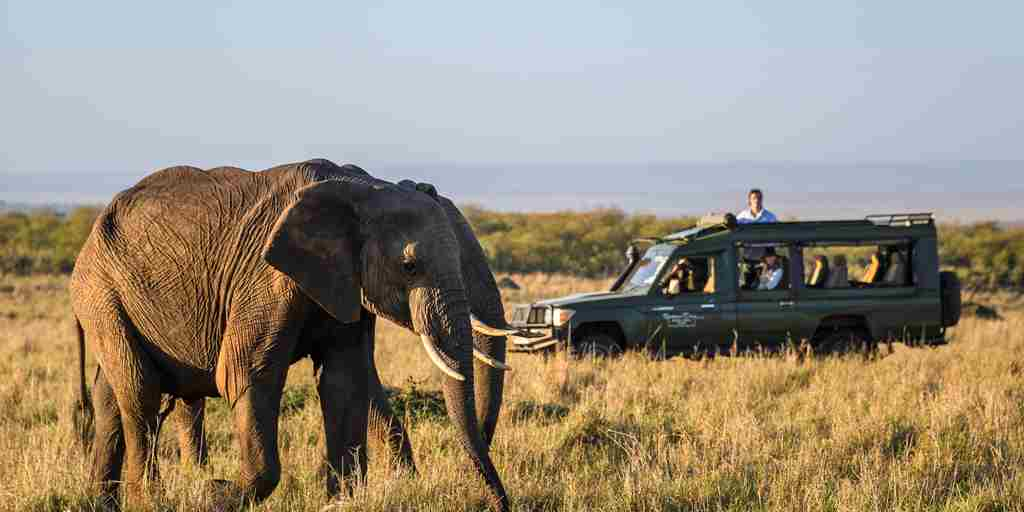 elephant-safari-governors-camp-kenya.jpg