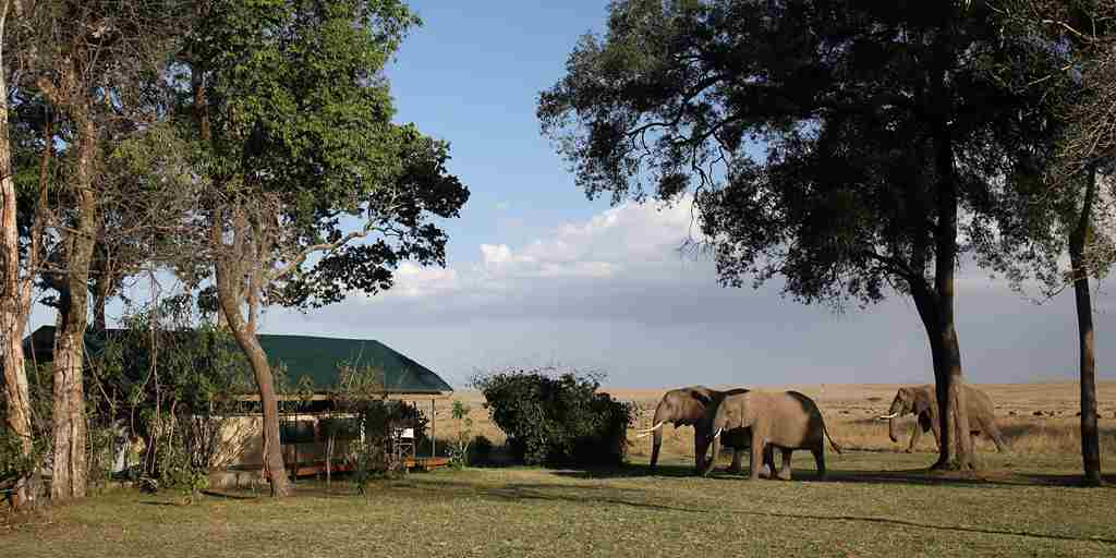 elephants-camp-governors-camp-kenya.jpg
