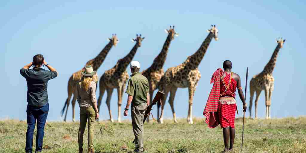 giraffes-viewing-governors-camp-kenya.jpg