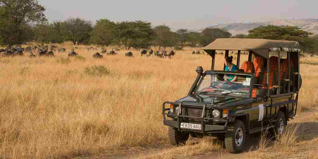 Tanzania-Safari-Game-Drive.jpg