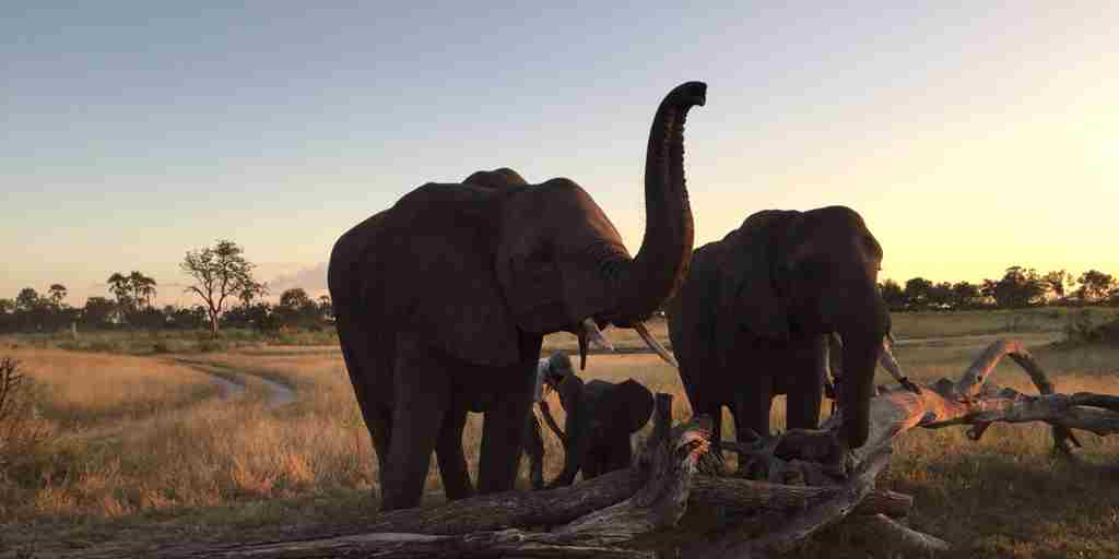 Botswana-elephants-Abu-Camp